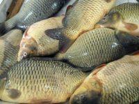 Засилени проверки по рибарските магазини преди Никулден!