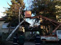 Паднали и опасно надвиснали дървета отстраняваха огнеборци в Плевен и Гулянци