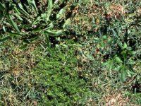Третират срещу плевели в района на жп линията Плевен – Горни Дъбник