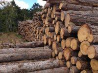 Камион, натоварен с 10 кубика дървесина без документи, е спрян тази сутрин край Червен бряг
