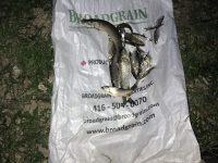 Засякоха на място бракониери да ловят риба с апарат за електроулов във Вит край Дисевица