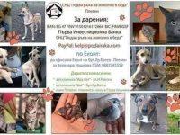 Спешна нужда от храна и ваксини има плевенската организация, грижеща се за бездомни животни