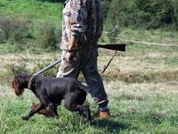 МВР с превантивни мерки за безопасно протичане на новия ловен сезон за местен дребен и едър дивеч