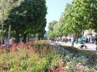 План за постепенна подмяна на дърветата в централната градска част поиска кметът Спартански