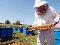 """Плевенчанинът Румен Балински с награда """"Пчелар №1 на България"""""""