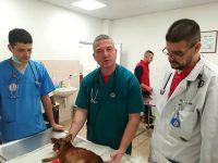 Специалистите от Ветеринарна клиника ИДА-ВЕТ – отново уникални!