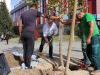 По примера на кмета: Общински съветници осиновяват фиданки в Плевен