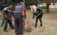 Човек трябва да засади поне едно дърво в живота си! Те го направиха! – виж снимки