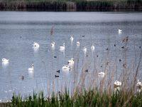 """С поредица открити уроци в ПП """"Персина"""" ще отбележат Световния ден на влажните зони"""