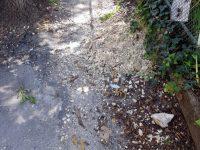 В Плевен асфалтират участъци от тротоари и подготвят нови за ремонт