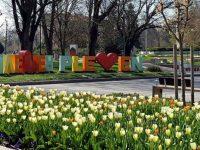 Пъстри лалета и теменужки украсяват центъра на Плевен (снимки)