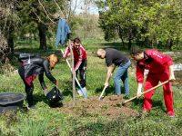 В Седмицата на гората служители на Община Долни Дъбник засадиха нови дръвчета в Централния парк на града