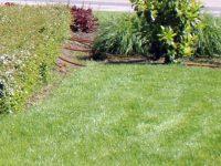 """Косене на тревните площи и засаждането на летни цветя започва """"Паркстрой"""""""