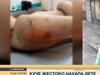 Куче нахапа жестоко дете в плевенско село