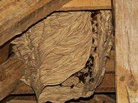Обезвредиха гнездо на стършели на покрива на детска градина в Плевен