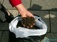 Прокуратурата с проверка по жалби за отровени пчели в област Плевен