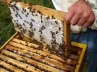 Протест на пчелари ще се проведе днес в Плевен