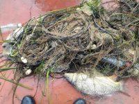 Серия от нарушения установиха инспекторите на ИАРА – Плевен във водите на Дунав и Вит