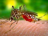Днес и утре ще продължи пръскането срещу комари по поречието на река Дунав