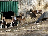 Плевенският зоопарк получи нов петгодишен лиценз
