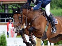 Турнир по конен спорт – квалификация за държавно първенство ще се проведе в Кнежа