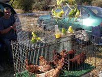 Пазар за дребни животни се проведе за първи път в Тотлебен