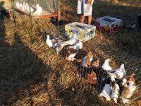 Пазар за дребни животни ще организират всеки месец в село Тотлебен