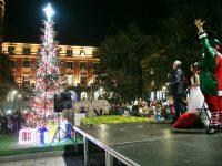 Коледната елха на Плевен грейна /снимки и видео/
