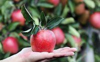 Може ли цялото семейство да се храни здравословно