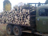 Над 800 актове на нарушители са съставили за година от Държавно горско стопанство – Плевен