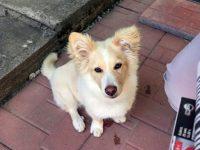Помогнете! Изгубено е кученце в района на ВиК в Плевен