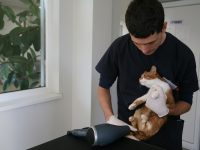 "Нов шанс за живот на две котета дадоха лекарите от ветеринарна клиника ""ИДА-ВЕТ"""