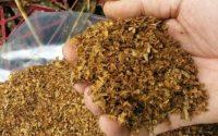 Плевенските полицаи иззеха 100 килограма нарязан тютюн без бандерол
