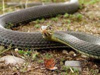 Огнеборци уловиха змия в детска градина в Долни Дъбник