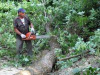 """Доброволческа инициатива за почистване на сухи и опасни клони от дърветата се проведе в """"Кайлъка"""""""