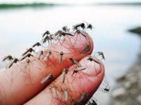 Община Гулянци започва наземно и авиационно третиране срещу комари