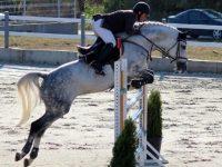 """Турнир по конен спорт и квалификация за Държавно първенство на Конна база """"Студенец"""". Днес и утре!"""
