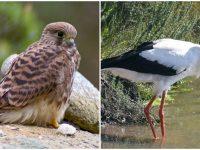 Плевенските екоинспектори изпратиха в спасителен център две птици от защитен вид