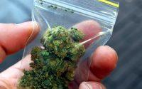 Задържаха непълнолетен с марихуана в Плевен