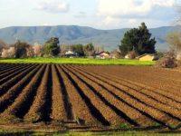 55 лв. е средната цена на рентата за дка земеделска земя в област Плевен