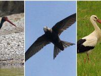 Плевенските екоинспектори изпратиха в спасителен център птици от защитени видове