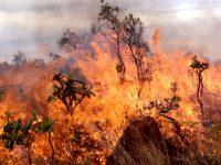 Повишава се пожароопасността в следващите дни в област Плевен