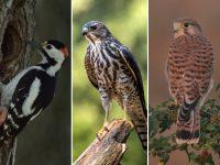 Плевенските екоинспектори изпратиха в спасителен център намерени в безпомощно състояние птици
