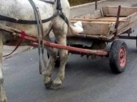 Регистрация на каруците започва в община Долни Дъбник