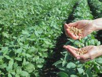 25 октомври е професионален празник на работещите в областта на земеделската наука.