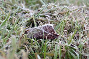 Жълт код за ниски температури в област Плевен е обявен за сутринта на 20 октомври, възможни са слани