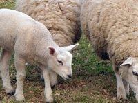 Разкриха трима, откраднали шилета от Института по фуражни култури в Плевен