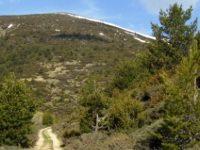 Защитени зони предстои да бъдат обявени на територията на РИОСВ – Плевен
