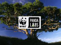 "Отбор на СУ ""Стоян Заимов"" – Плевен класиран за националния етап на PandaLabs"