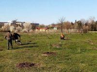 Залесяването в Левски продължава